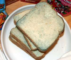 Getting Slightly Moldy Bread Proved To Be More Difficult Than I Expected I Bought The Cheapest White Bread I Could Find And Waited For It To Go Green